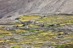 Oasi Himalayan Immagini Stock