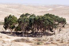 Oasi nel deserto fotografie stock libere da diritti