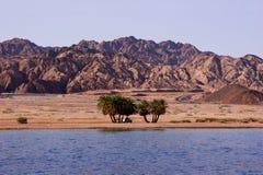 Oasi sul litorale del deserto Fotografia Stock