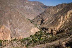 Oasis à l'intérieur du canyon de colca Images libres de droits