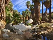 oasis Photos stock