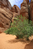 Oasis. At Canyon im Arches National Park, Utah Royalty Free Stock Photo