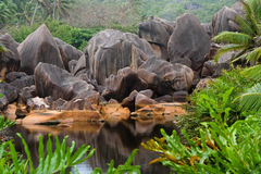 OASIS. On Seychelles, beautiful colors, and reflections in watter Royalty Free Stock Photos