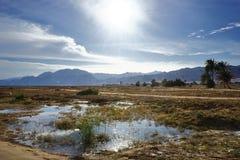 oasis Image libre de droits