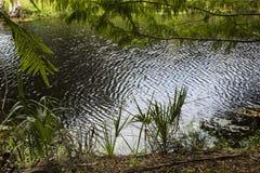 oasis Fotos de Stock Royalty Free