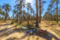 oasis stockfotografie