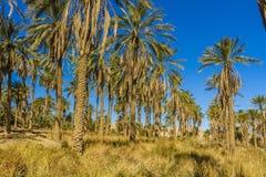 oasis lizenzfreies stockbild