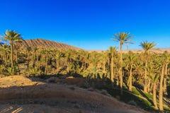 oasis Lizenzfreie Stockbilder