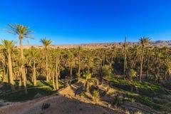 oasis Stockfoto
