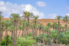 Oasis Al Haway Oman Royalty Free Stock Photography