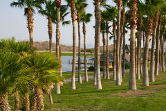 Oasis in the Arizona desert. Palm tree lined lakeshore with fishing dock and ducks by mountains in the desert near Phoenix, Arizona Royalty Free Stock Image
