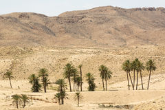 An oasis in the Atlas Mountains Royalty Free Stock Photo