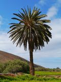 The oasis Barranca of Ajui on Fuerteventura Stock Photography