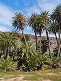 The oasis Barranca de la Madre of Ajui on Fuerteventura Royalty Free Stock Photo