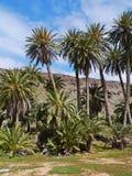 The oasis Barranca de la Madre of Ajui on Fuerteventura Royalty Free Stock Photo