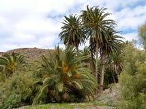The oasis Barranca de la Madre of Ajui on Fuerteventura Stock Photo