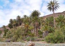 The oasis Barranca de la Madre of Ajui on Fuerteventura Royalty Free Stock Image
