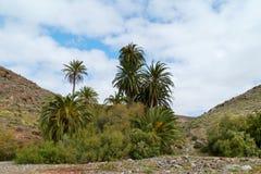 The oasis Barranca de la Madre of Ajui on Fuerteventura Stock Images