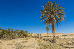 Oasis. In Biskra county in Algeria Royalty Free Stock Photography