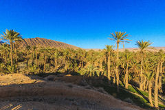 Oasis. In Biskra county in Algeria Royalty Free Stock Images
