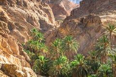 Oasis Chebika de la montaña en la frontera de Sáhara, Túnez, África Imagen de archivo libre de regalías