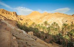 Oasis Chebika de la montaña Túnez occidental En otoño Foto de archivo libre de regalías