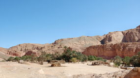 Oasis in a color canyon. Egypt, Sinaitic peninsula, Nuveiba Royalty Free Stock Photography