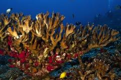 Oasis coralino fotografía de archivo libre de regalías