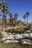 Oasis - Damaraland - Namibia Stock Image