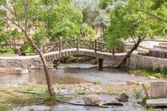 Oasis dans le désert Images stock