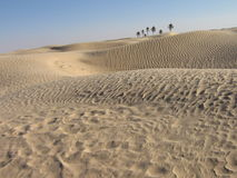 Oasis dans le désert Photos libres de droits
