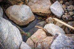 Oasis dans le désert de Joshua Tree National Park photo libre de droits