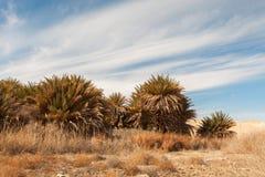 Oasis dans le désert, palmiers Image libre de droits