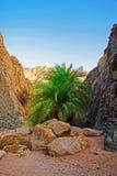 Oasis dans les montagnes Photographie stock libre de droits