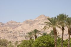 Oasis dans Negev Photo libre de droits