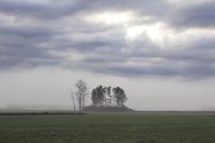 Oasis de árboles Foto de archivo