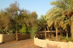 Oasis de Al Ain Fotos de archivo libres de regalías