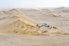 Oasis de désert Image libre de droits