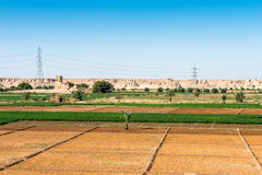Oasis de Dakhla, Egypte images libres de droits