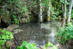 Oasis de l'eau Images libres de droits