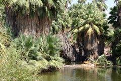 Oasis de la selva de la palmera Imágenes de archivo libres de regalías