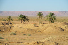 Oasis de las palmeras en lejos Imagenes de archivo
