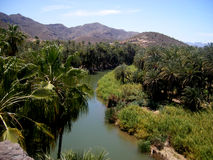 oasis de mulege de Californie Photo stock