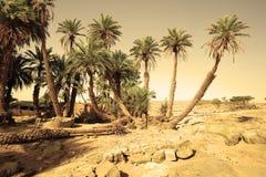 Oasis de Oum Laalag del `de D Imagenes de archivo