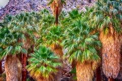 Oasis de paume groupée ensemble dans le désert Images stock