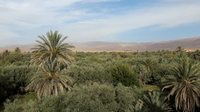 Oasis de Tinghir Maroc Images libres de droits