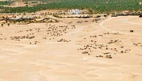 Oasis del desierto Imágenes de archivo libres de regalías