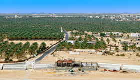 Oasis del desierto Fotos de archivo libres de regalías