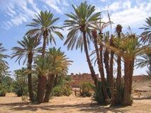 Oasis del desierto con la palmera Fotografía de archivo