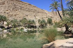 Oasis des plaisirs, Oman Photo libre de droits